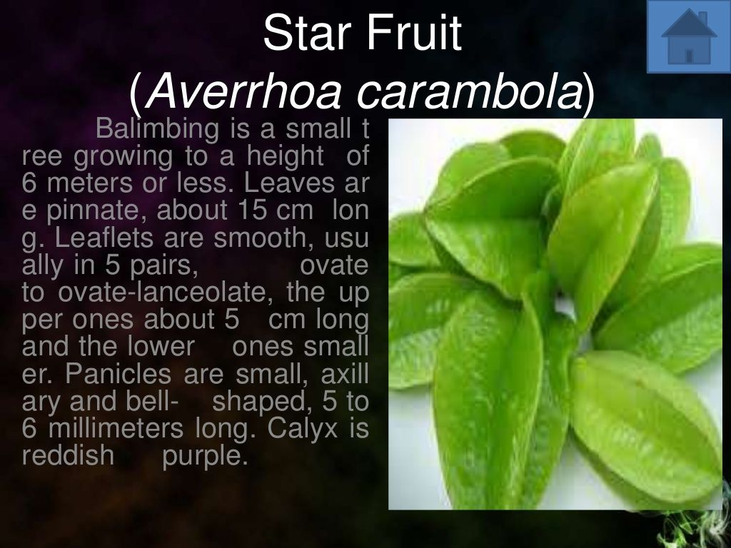 Star Fruit (Averrhoa carambola)  Balimbing is a small t ree growing to a height of 6 meters or less. Leaves ar e pinnate, ...