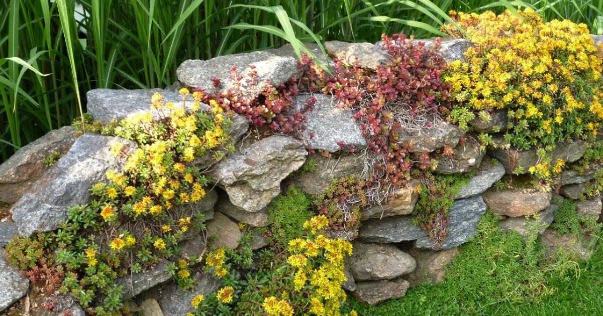 natursteinmauern farbenfroh bepflanzen bepflanzung. Black Bedroom Furniture Sets. Home Design Ideas