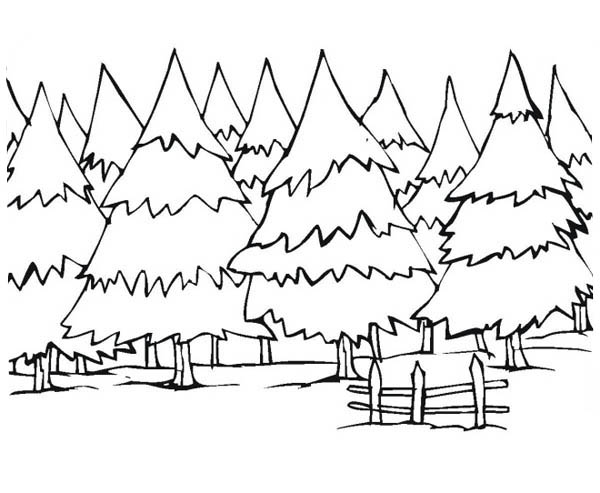 Pine Tree Forest In Canada Coloring Page Coloring Sky In 2020 Tree Coloring Page Coloring Pages Winter Forest Coloring Pages