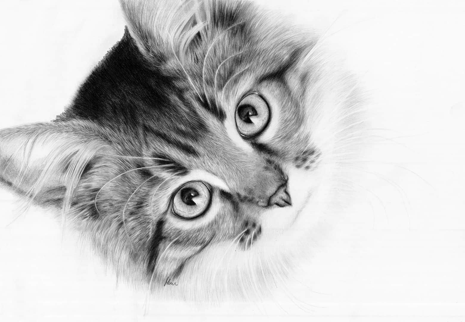 Kot Hipnotyczny Magdalena Muraszko Kowalska Rysunki Animal Portraits Art Cats Pet Portraits