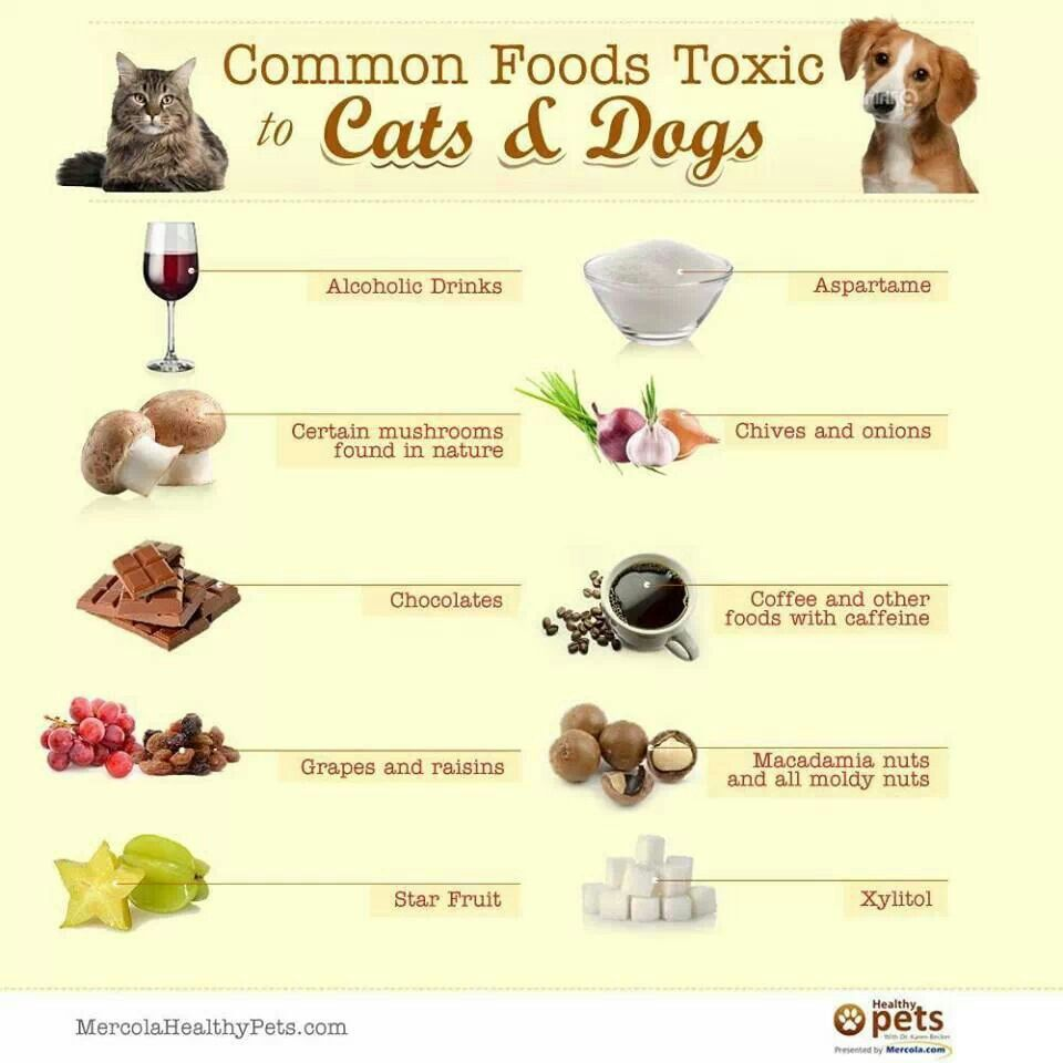 Toxic Animal Foods Foods Bad For Dogs Dangerous Foods For Dogs