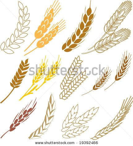 Google Image Result for http://image.shutterstock.com/display_pic_with_logo/271603/271603,1224826740,1/stock-vector-wheat-ears-19392466.jpg
