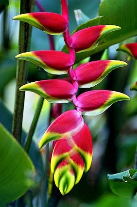Pin By Triceapo On Roots Pinterest Mauritius Mauritius Island