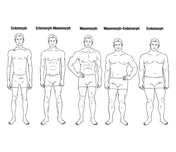 male-body-shapes.jpg the_five_human_body_types_main.jpg?itok ...