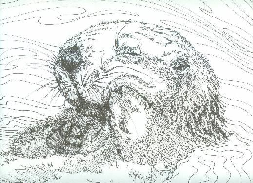 Sea Otter | Coloring | Pinterest | Dibujo