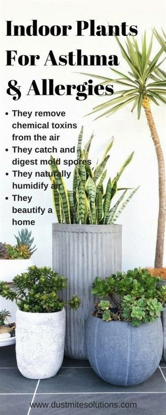 best indoor plants for asthma allergies and air pollutions -   25 plants Growing backyards ideas
