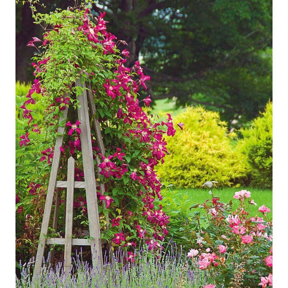 Clematis Rosemoor Gardini Garten Klematis Kreative Garten Ideen