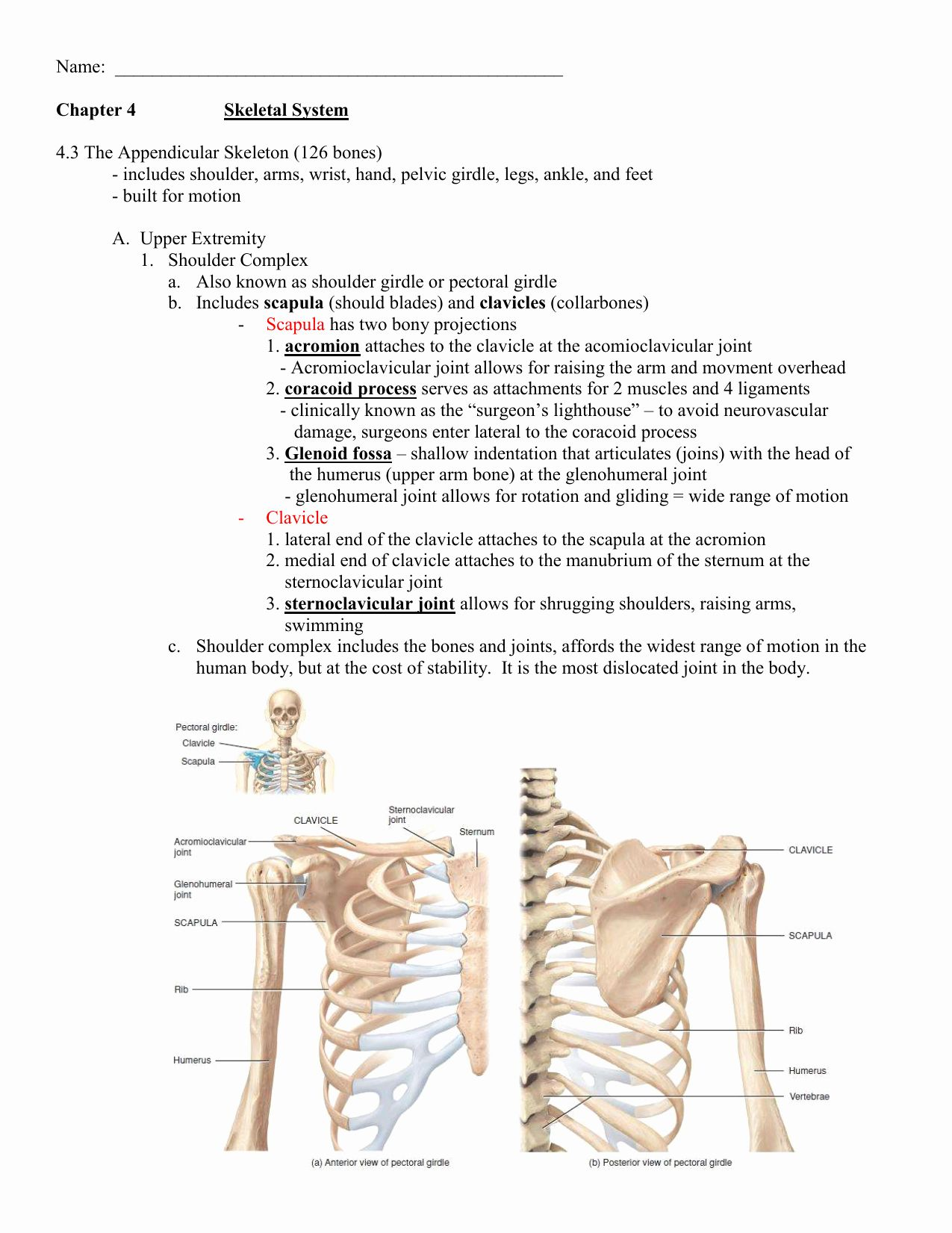 Appendicular Skeleton Worksheet