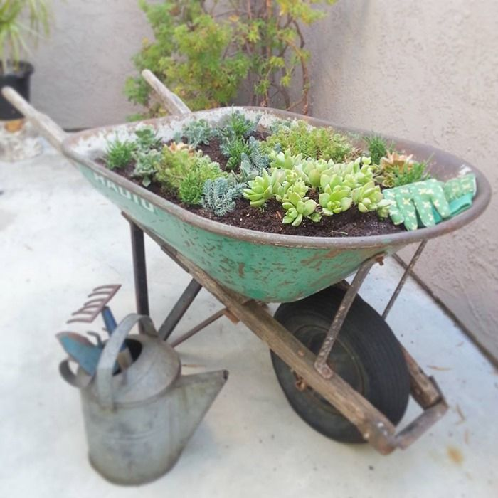 Wonderful Succulent Planter, From An Old Wheel Barrow.