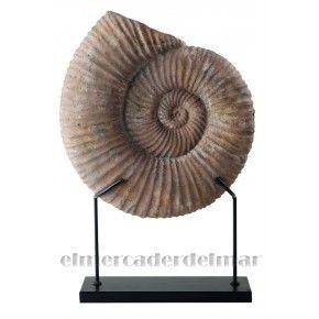 Fósil de concha marina con base.