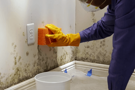 How To Remove Mold From Walls In Bathroom Complete Tips And Guides Bathroomcleaningtips Mold In Bathroom Bathroom Mold Remover Mold Remover