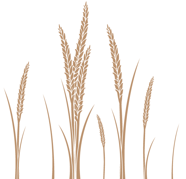 Ear Of Wheat Vector Art Free Wheat Tattoo Wheat Drawing Free Art