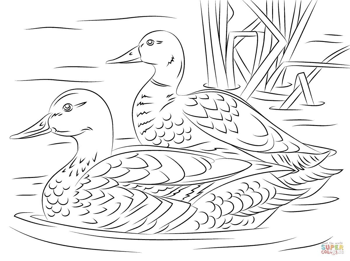 22 Elegant Picture Of Duck Coloring Pages Davemelillo Com Bird Coloring Pages Bird Drawings Animal Coloring Pages