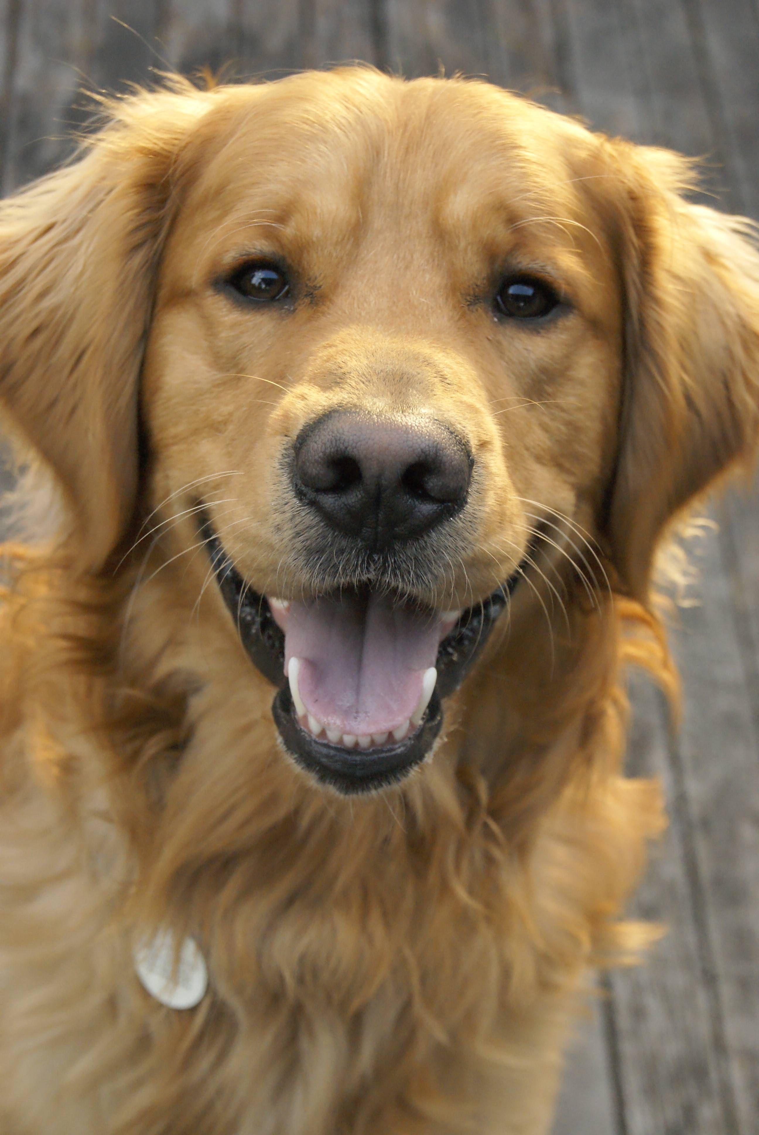 Hi, I'm Doug! And I love you!: