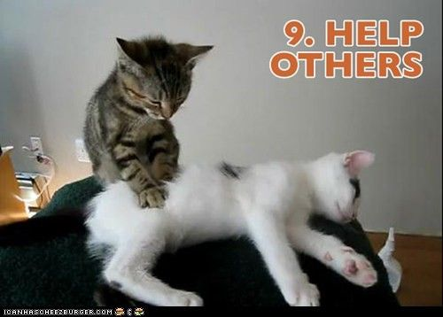 Top Ten New Years Resolutions...as Illustrated by Kitties! - funnyzdaily.com