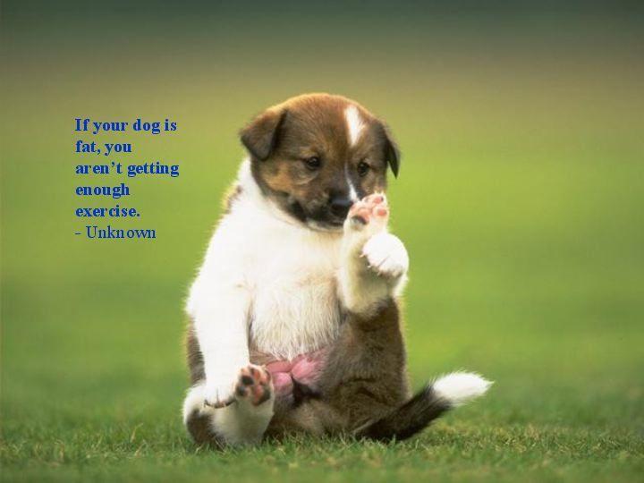 Download Pinterest Chubby Adorable Dog - 11e6213a70cc20bdedc82e671d1b1b8c  Perfect Image Reference_933574  .jpg