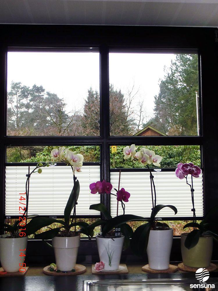 Sensuna Plissee Am Kuchenfenster Von Kunden Pleated Shade By Sensuna On The Kitchen Window Of Customers Weiss Rosa Pleated Shade Kitchen Window Windows