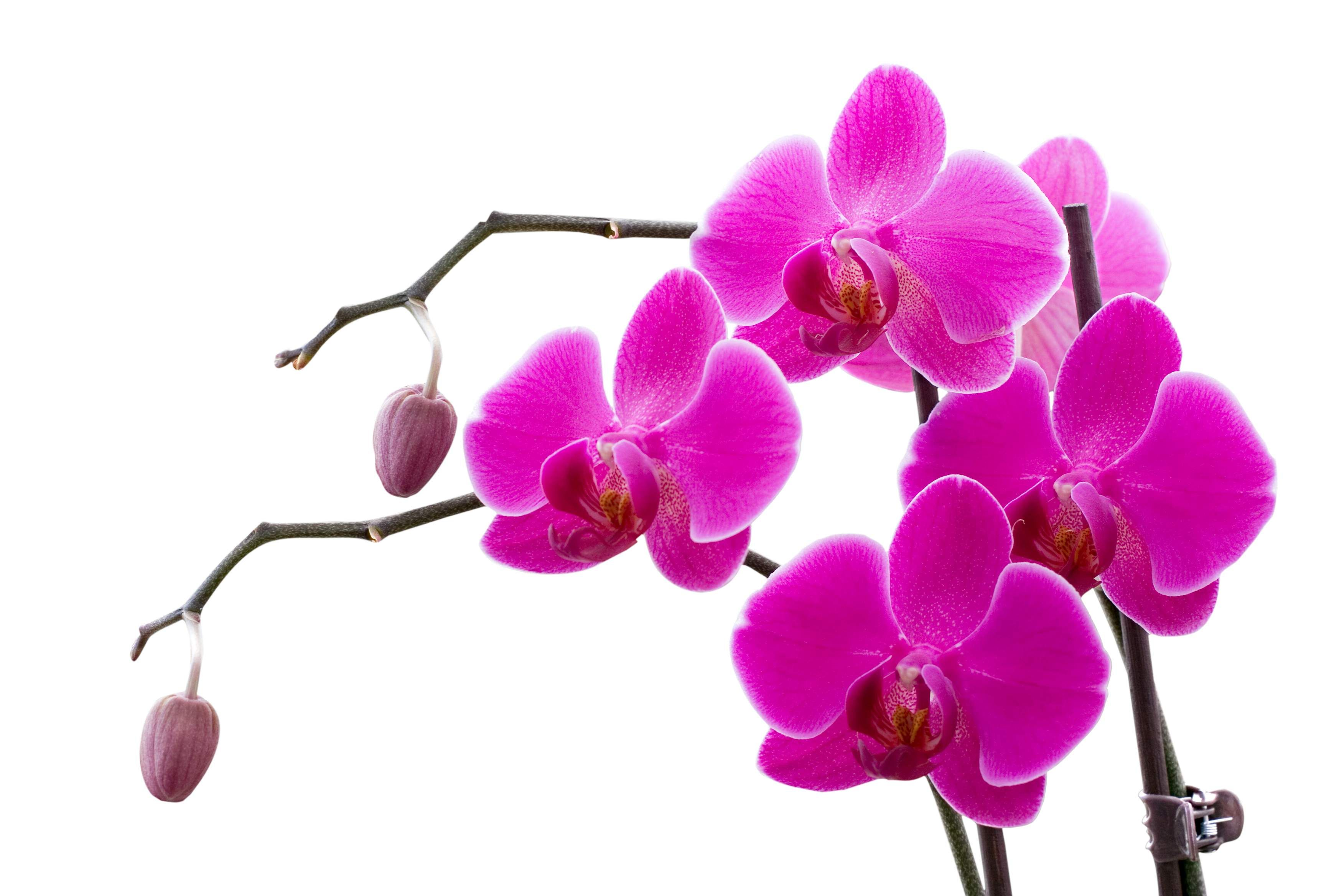 orchid images - Google Search   Orchids   Pinterest   Flowers