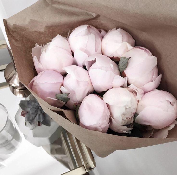 Pin De Carolina Villanueva Jacques En Flowers