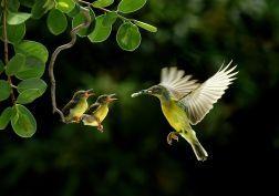 Birds wildlife baby birds wallpaper