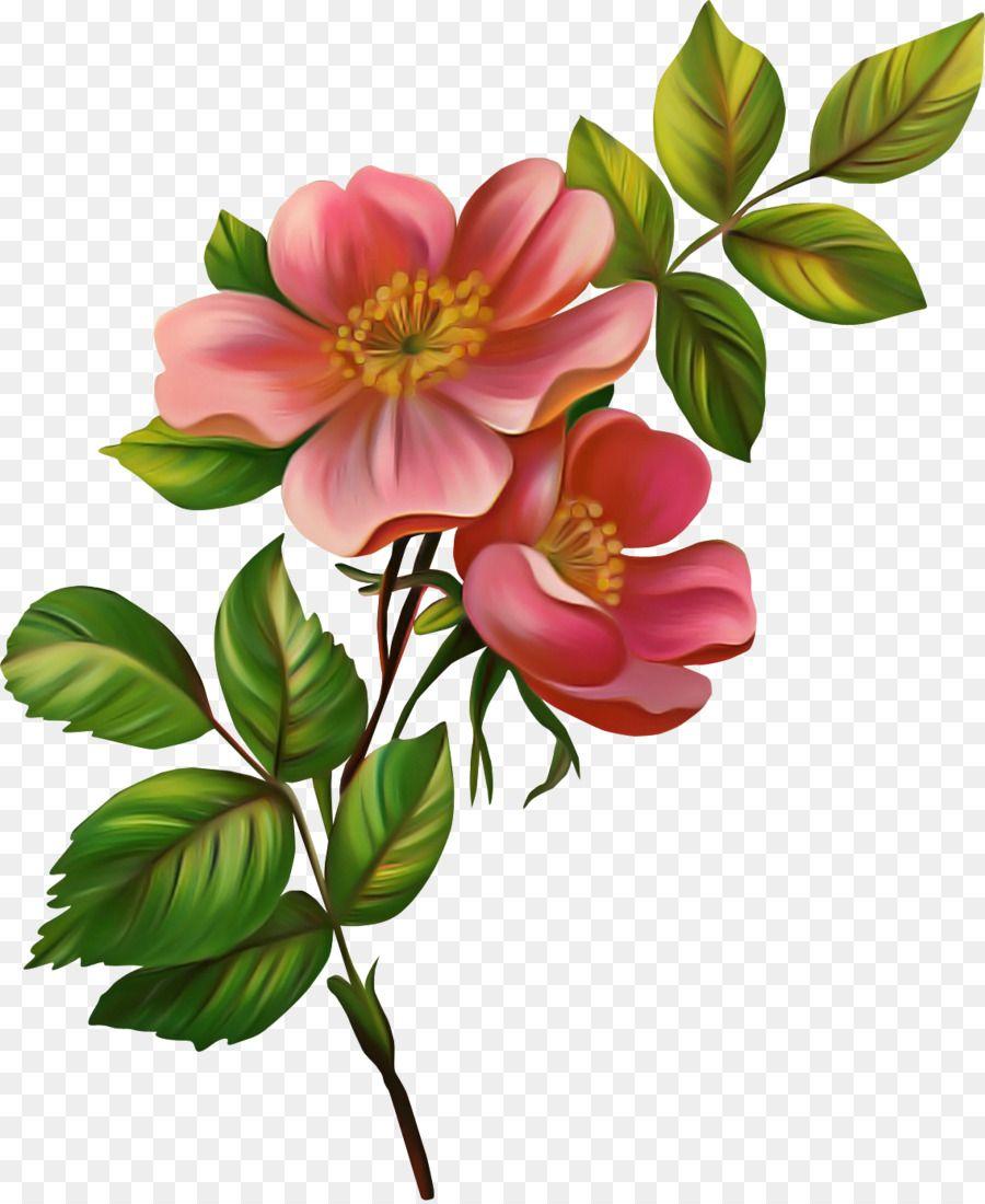 bunga tanaman berbunga kelopak gambar png bunga cat air gambar botani lukisan bunga pinterest