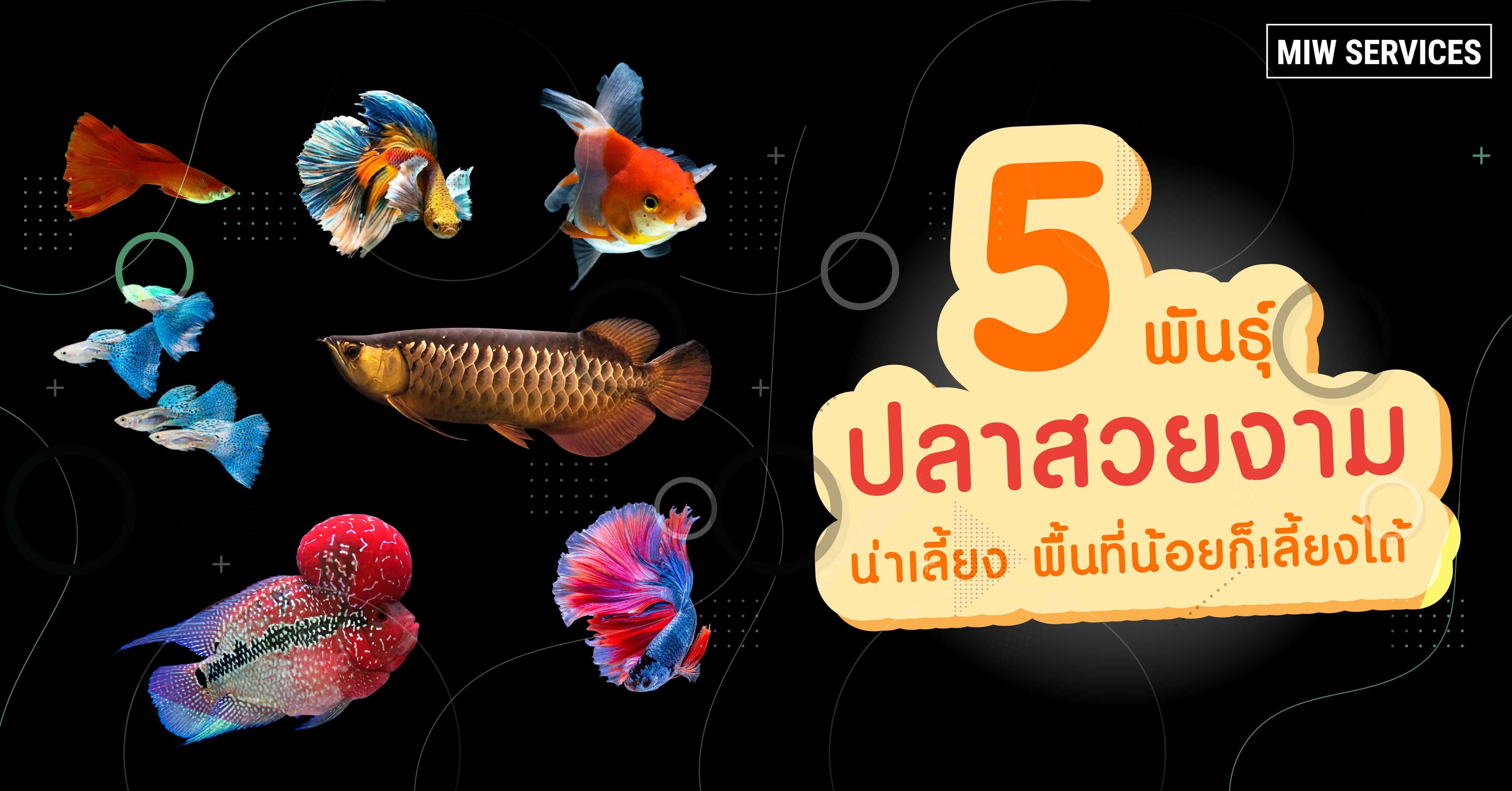 5 พ นธ ปลาสวยงาม น าเล ยง พ นท น อยก เล ยงได ในป 2021 ปลาหมอส ปลาก ด ปลาหางนกย ง