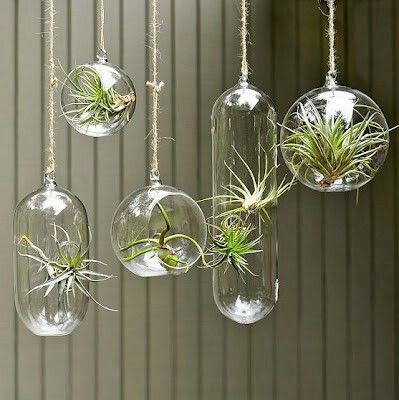 filles de l 39 air garden pinterest air plants plants and terraria. Black Bedroom Furniture Sets. Home Design Ideas
