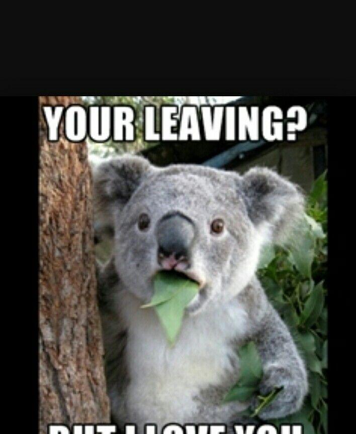Be a liar If I wasn't confused | Koala meme, Cute animals ...  Funny Koala Memes