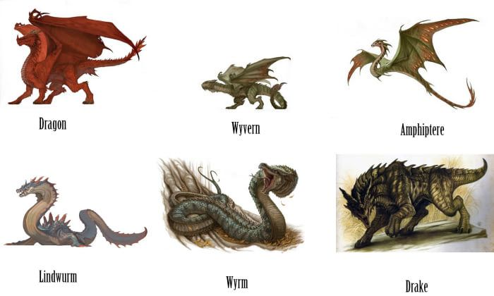the difference between wyverns