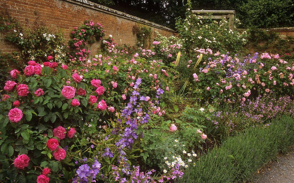 Mottisfont Abbey Rose Gardens Hampshire Uk Beautiful Flowers