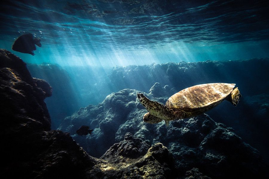 Подводная природа картинки фото