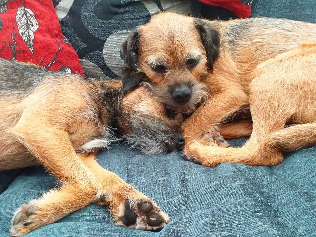 Sleepy Time With My Brother After A Busy Few Days Zzzzz