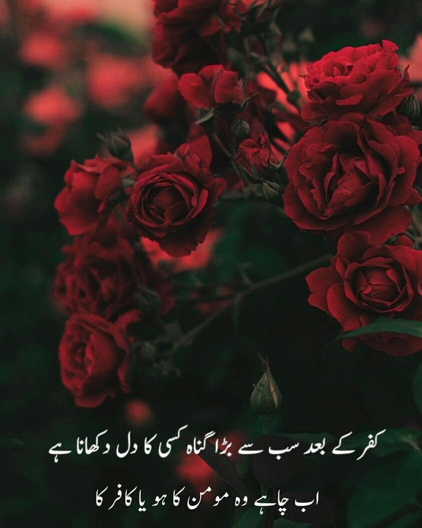 Pin By Asma Mujeer On Quotes Islamic Quotes Urdu Poetry Rose