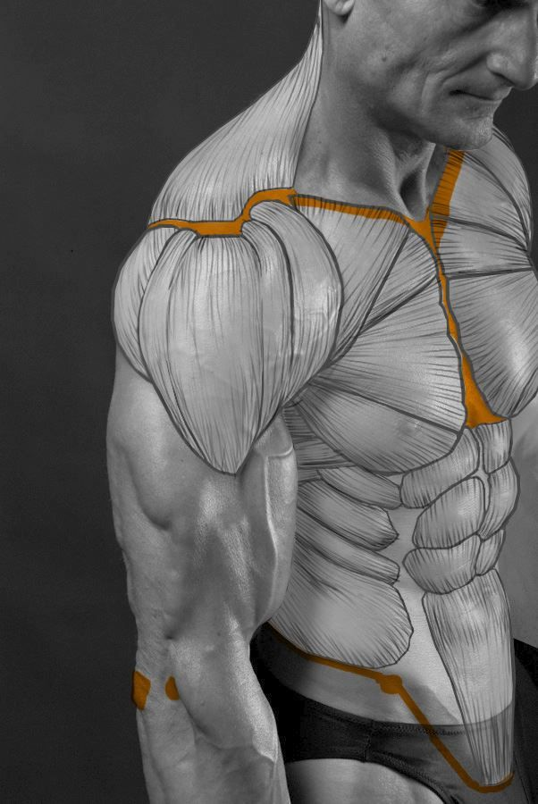 Мышечный каркас – анализ | Batman | Pinterest | Anatomía, Cuerpo y ...