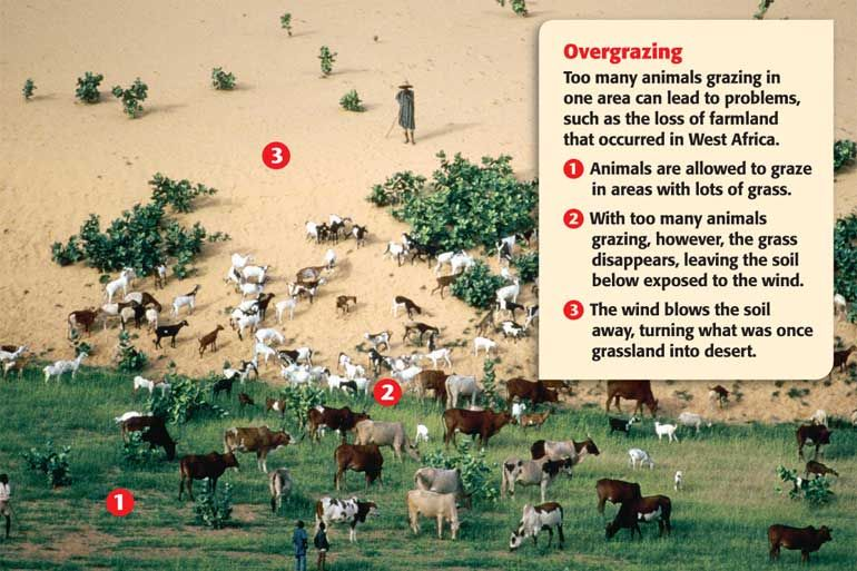 overgrazing problems