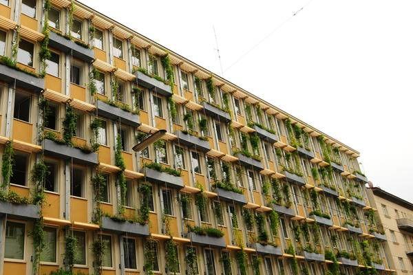 Begrünte Gebäude sind Lebensraum für Insekten und mehr   Regionews.at