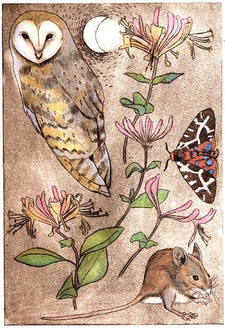 art by Jane Tomlinson