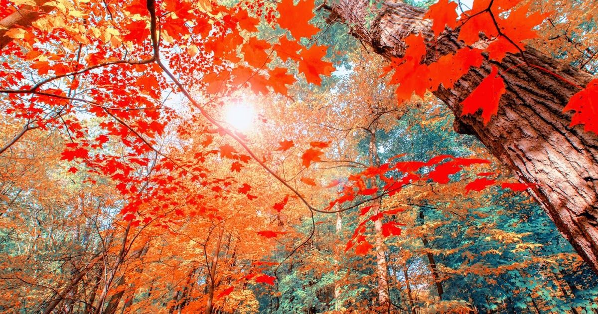 21 Hd Autumn Wallpapers 1080p Autumn Wallpapers Hd 280805 Hd Autumn Download Wallpapers Autumn Hd Wallpapers 75 Pictures Autumn Wallpapers 1080p 11s6db2 Wal