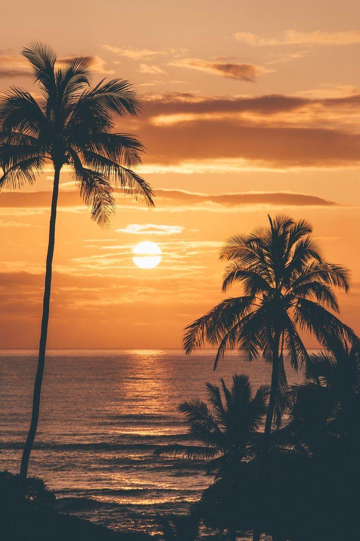 Beach Sunset Pine Trees