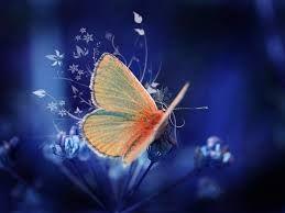 lindas borboletas - Pesquisa Google