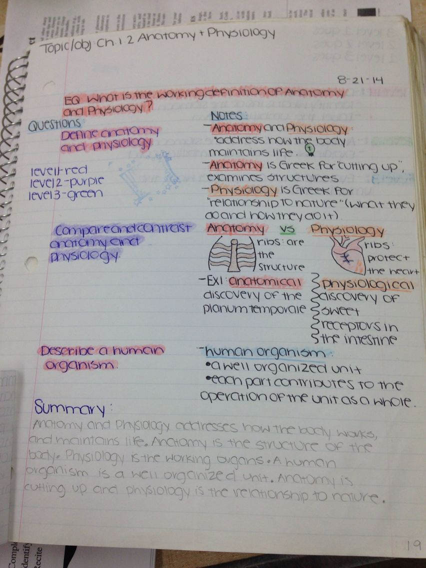 Good organization & use of color  | Ch 1 2: Anatomy & Physiology