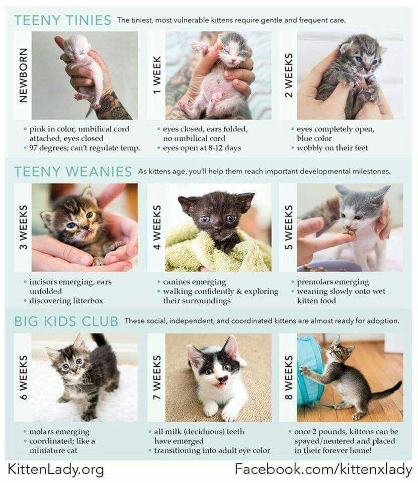 Pin By Kelsey Christ On Cats Kitten Care Newborn Kitten Care Baby Kittens