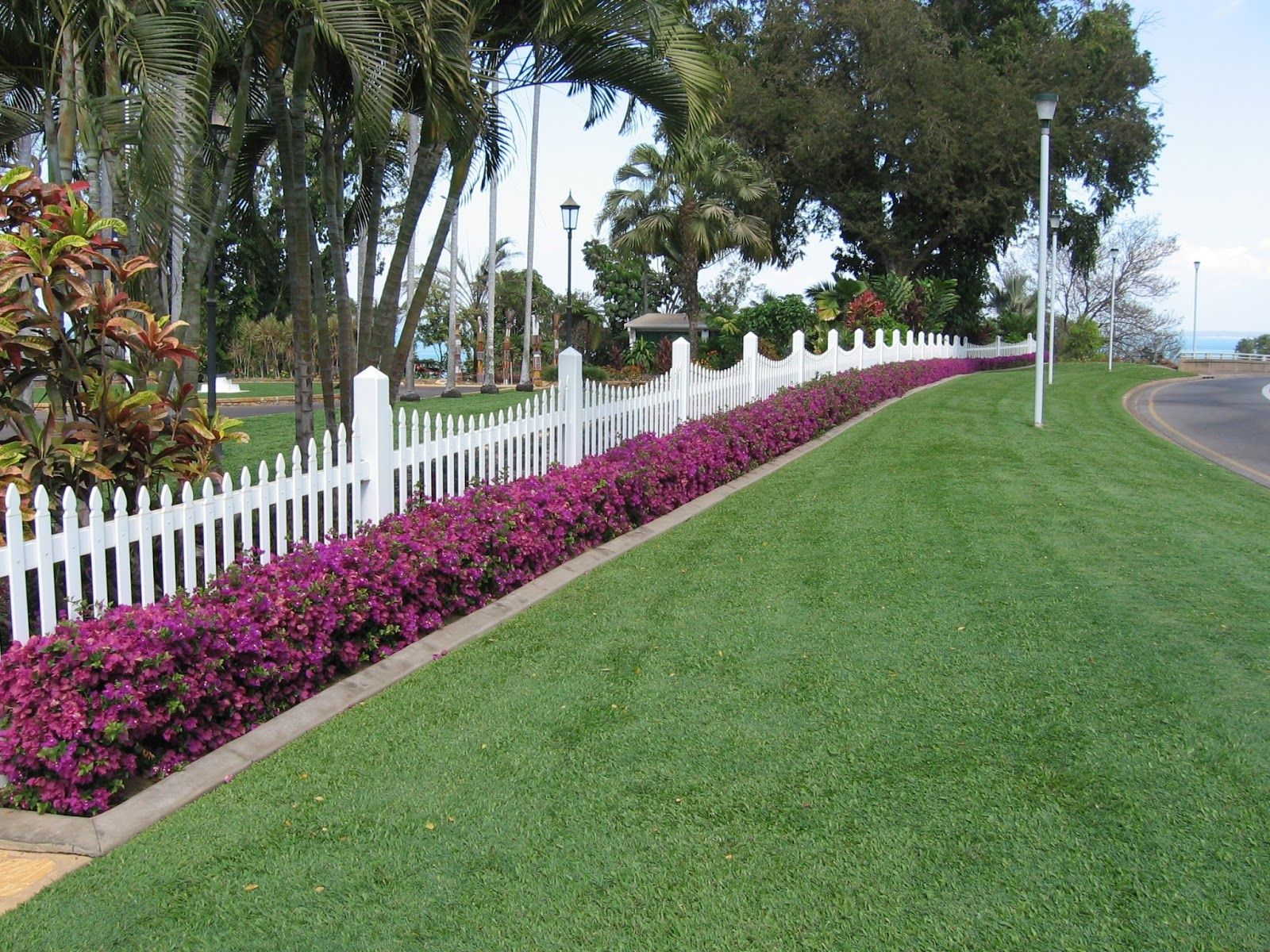 A low bougainvillea hedge in the caribbean though this for Low bushes for landscaping