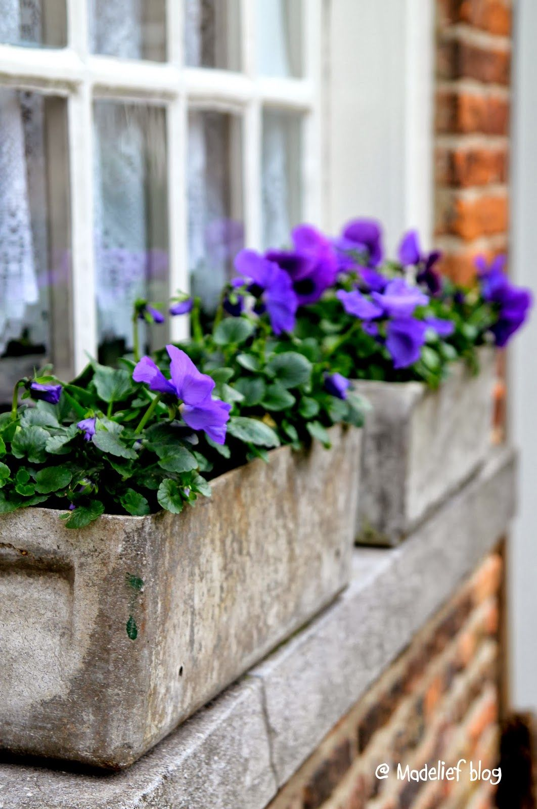 Concrete Window Box Planters Window Boxes Purple Pansies Are Simple And Perfect For