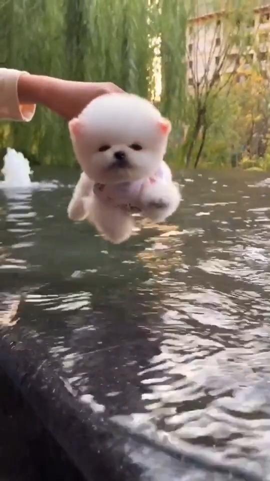 I am Swiming