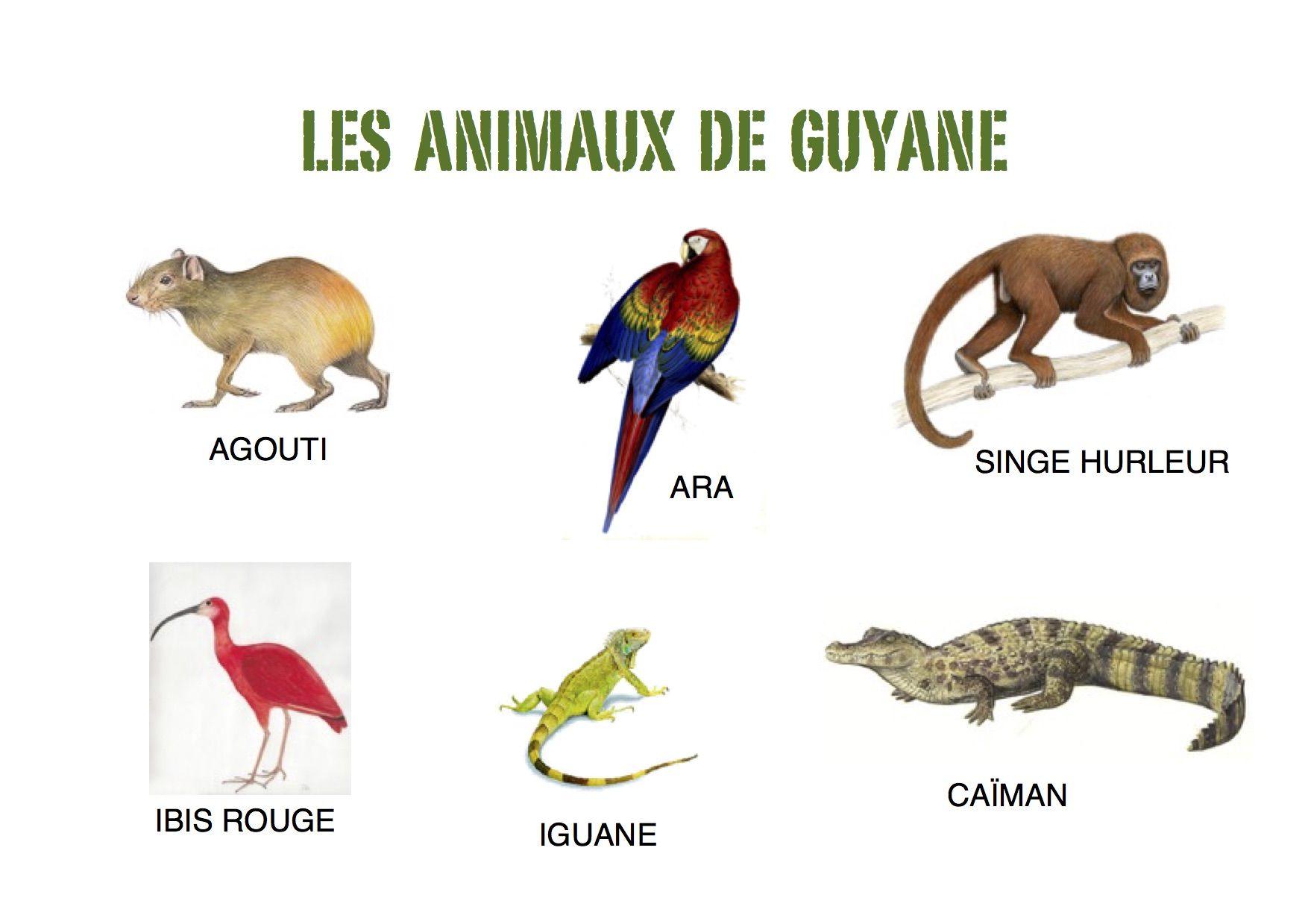 Imagier simple sur les animaux de guyane petite section de - Animaux a imprimer ...