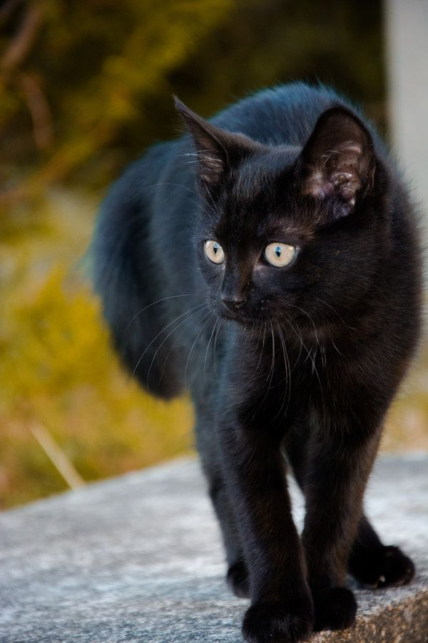 Happy Black cat Tuesday to all black cat lovers. Black cats rock!!!!