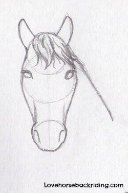 Designing Horse Pencil Drawings Finishing The Horse Head