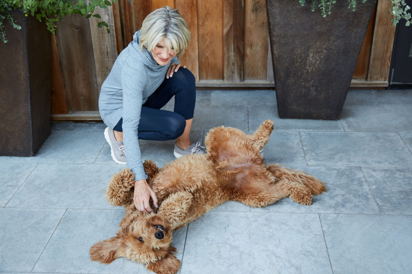 how to stop dog aggression towards owner