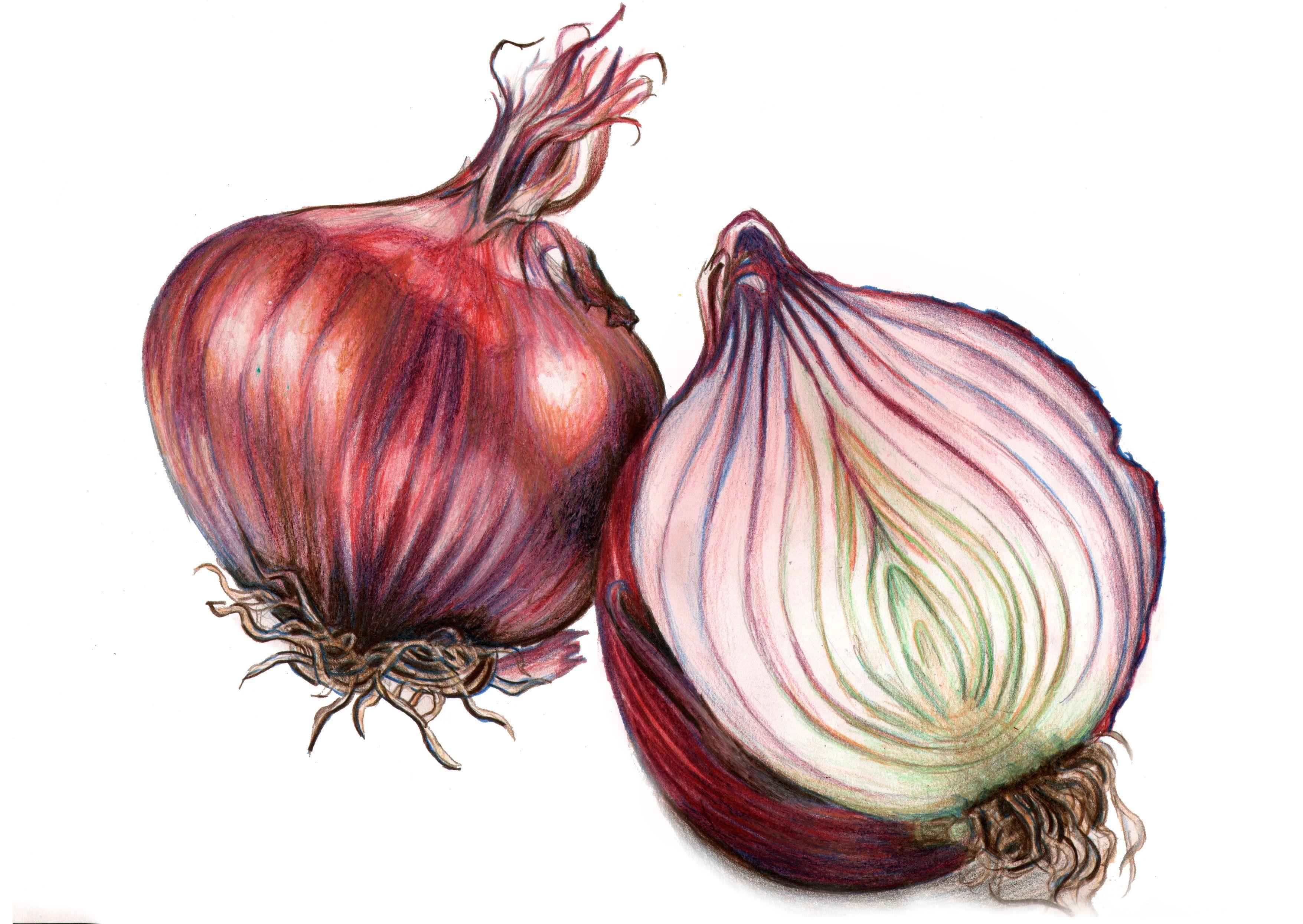 картинки луковицы лука всего именно